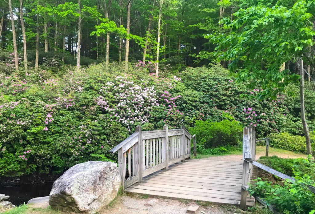 ogrody japońskie to świetny pomysł na przydomowy ogródek w minimalistycznym stylu